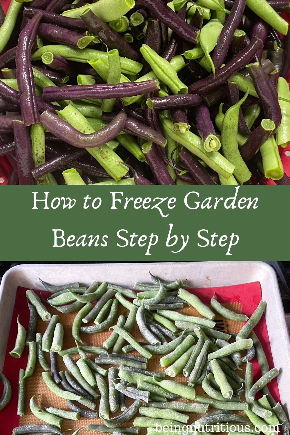 Split image: top is fresh beans, bottom is frozen beans on cookie sheet. Text overlay in green rectangle: How to Freeze Garden Beans Step by Step.